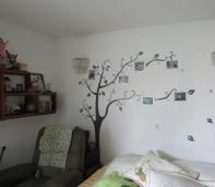 árbol fotos